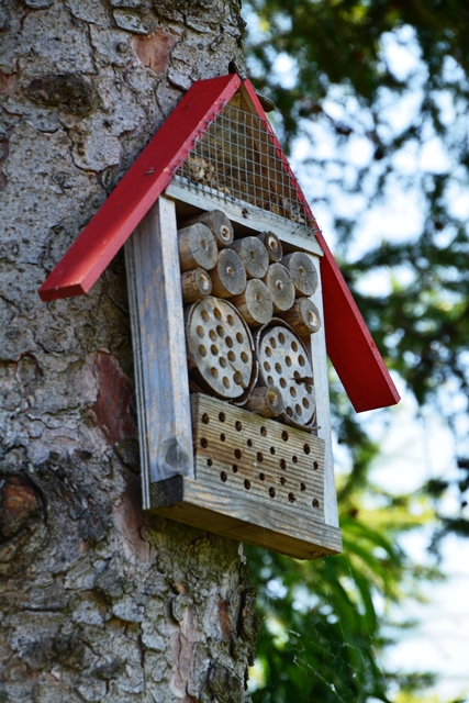 Bee Hotel pitched against a tree trunk. It consists of an open wooden frame filled with pieces of wood with holes drilled in them to serve as brooding sites for solitary bees.