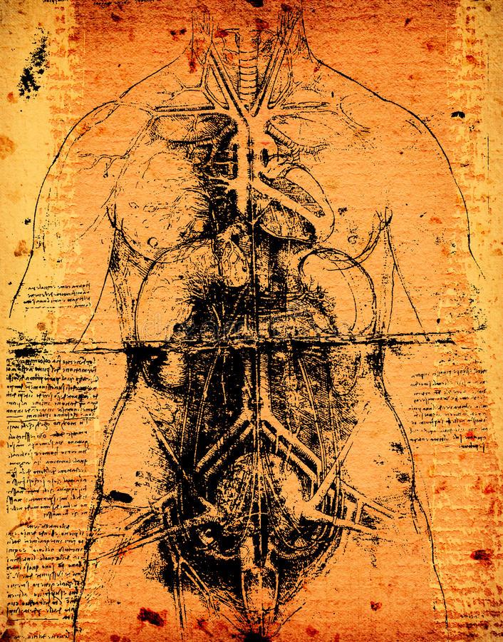 Dreamstime anatomy art - Leonardo da VinciLeonardo