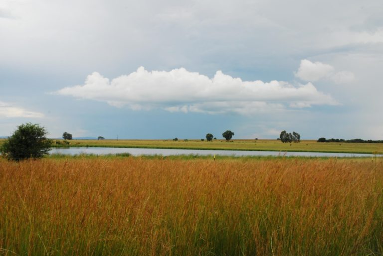 Summer in the Free State after Good Rains - On the way between Bloemfontein and Pretoria -